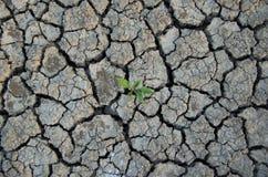 Κλιματολογικές αλλαγές Ξεράνετε τη ραγισμένη γη με τις εγκαταστάσεις που αγωνίζονται για τη ζωή στοκ εικόνα με δικαίωμα ελεύθερης χρήσης