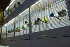Κλουβί με τα πουλιά σε ένα κατάστημα κατοικίδιων ζώων, petshop Πώληση των κατοικίδιων ζώων και των ζώων Στοκ Εικόνα