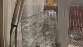 Κλουβί πουλιών ενάντια στο παράθυρο