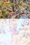 Κλουβί πουλιών στα χιονισμένα κωνοφόρα στον ήλιο στοκ φωτογραφία
