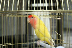 κλουβί πουλιών Στοκ Φωτογραφία