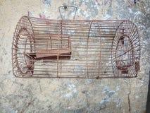 κλουβί των πουλιών Στοκ Εικόνα