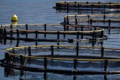 Κλουβιά για την καλλιέργεια ψαριών στοκ εικόνα