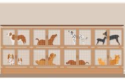 Κλουβιά των σκυλιών και των γατών για την πώληση στο κατάστημα κατοικίδιων ζώων Στοκ Εικόνες