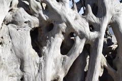 Κοίλη σύσταση Driftwood Στοκ φωτογραφία με δικαίωμα ελεύθερης χρήσης
