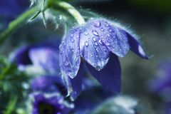 Κοίλος στον κήπο μου στοκ φωτογραφία με δικαίωμα ελεύθερης χρήσης