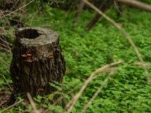 Κοίλο κολόβωμα με τα ζωηρόχρωμα μανιτάρια που αυξάνονται σε το, από την πολύβλαστη βλάστηση στοκ φωτογραφίες