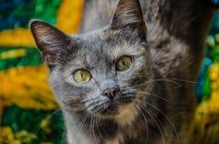 κοίταγμα γατών φωτογραφικών μηχανών Στοκ εικόνα με δικαίωμα ελεύθερης χρήσης