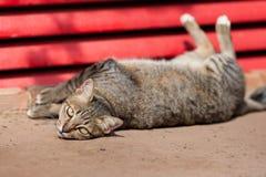 Κοίταγμα γατών Στοκ Εικόνες