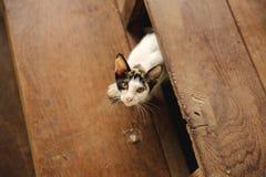 κοίταγμα γατών Στοκ Φωτογραφία