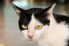 Κοίταγμα γατών Στοκ εικόνα με δικαίωμα ελεύθερης χρήσης