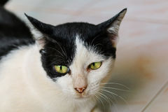 Κοίταγμα γατών Στοκ εικόνες με δικαίωμα ελεύθερης χρήσης