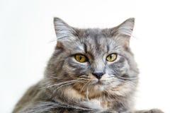 Κοίταγμα γατών Στοκ φωτογραφία με δικαίωμα ελεύθερης χρήσης