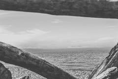 Κοίταγμα μέσω του driftwood στοκ φωτογραφίες