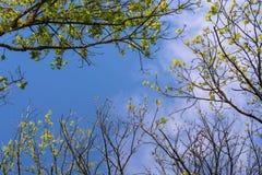 Κοίταγμα μέσω των φύλλων στο μπλε ουρανό στοκ εικόνες με δικαίωμα ελεύθερης χρήσης