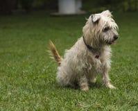 Κοίταγμα σκυλιών Στοκ Εικόνες