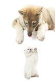 Κοίταγμα σκυλιών Στοκ εικόνες με δικαίωμα ελεύθερης χρήσης