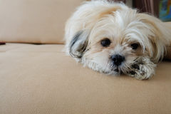 Κοίταγμα σκυλιών Στοκ φωτογραφίες με δικαίωμα ελεύθερης χρήσης