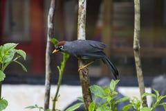 κοίταγμα τροφίμων πουλιών Στοκ φωτογραφίες με δικαίωμα ελεύθερης χρήσης