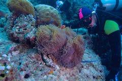 κοίταγμα ψαριών δυτών κλόο& Στοκ εικόνες με δικαίωμα ελεύθερης χρήσης