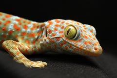 κοίταγμα gecko φωτογραφικών μηχανών στοκ εικόνες