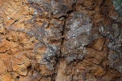 Κοίλο δέντρο στη μέση Στοκ εικόνες με δικαίωμα ελεύθερης χρήσης