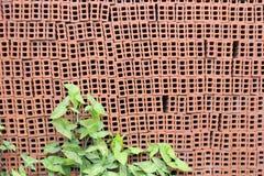 Κοίλο τούβλο Στοκ Φωτογραφία