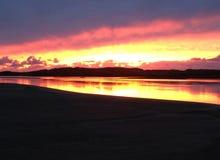 Κοβάλτιο Ηλιοβασίλεμα ιρλανδικών αγελάδων Στοκ φωτογραφίες με δικαίωμα ελεύθερης χρήσης