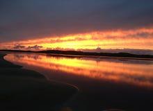 Κοβάλτιο Ηλιοβασίλεμα ιρλανδικών αγελάδων Στοκ φωτογραφία με δικαίωμα ελεύθερης χρήσης