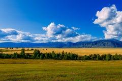Κοιλάδα βουνών, χρυσό τοπίο πανοράματος φθινοπώρου, Σιβηρία, Δημοκρατ στοκ εικόνα