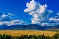 Κοιλάδα βουνών, χρυσό τοπίο πανοράματος φθινοπώρου, Σιβηρία, Δημοκρατία Altai, Ρωσία στοκ εικόνα με δικαίωμα ελεύθερης χρήσης