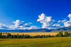 Κοιλάδα βουνών, χρυσό τοπίο πανοράματος φθινοπώρου, Σιβηρία, Δημοκρατία Altai, Ρωσία στοκ φωτογραφία με δικαίωμα ελεύθερης χρήσης