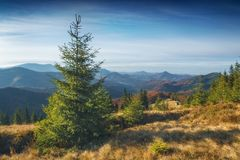 Κοιλάδα που καλύπτεται Καρπάθια με τη χλόη φθινοπώρου στοκ εικόνα με δικαίωμα ελεύθερης χρήσης