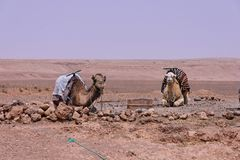 κοιλάδα draa μ ouarzazate πλησίον στοκ εικόνα