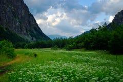 κοιλάδα grbaja στοκ φωτογραφίες με δικαίωμα ελεύθερης χρήσης