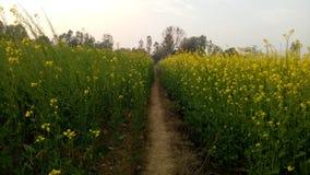 κοιλάδα napa μουστάρδας λουλουδιών στοκ φωτογραφία