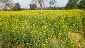 κοιλάδα napa μουστάρδας λουλουδιών στοκ εικόνες