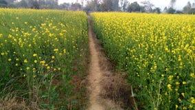 κοιλάδα napa μουστάρδας λουλουδιών στοκ φωτογραφίες