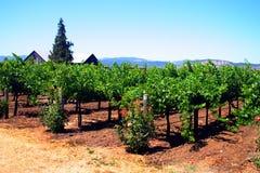 κοιλάδα sonoma napa Καλιφόρνιας στοκ φωτογραφία με δικαίωμα ελεύθερης χρήσης
