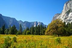 Κοιλάδα Yosemite, Καλιφόρνια Στοκ εικόνα με δικαίωμα ελεύθερης χρήσης