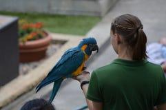 ΚΟΙΛΑΔΑ ΤΗΣ APPLE, ΜΙΝΕΣΟΤΑ - ΤΟΝ ΙΟΎΝΙΟ ΤΟΥ 2018: Το πουλί και ο εκπαιδευτής στο πουλί ζωολογικών κήπων Μινεσότας παρουσιάζουν Στοκ εικόνα με δικαίωμα ελεύθερης χρήσης