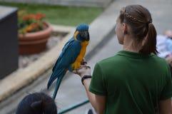 ΚΟΙΛΑΔΑ ΤΗΣ APPLE, ΜΙΝΕΣΟΤΑ - ΤΟΝ ΙΟΎΝΙΟ ΤΟΥ 2018: Το πουλί και ο εκπαιδευτής στο πουλί ζωολογικών κήπων Μινεσότας παρουσιάζουν Στοκ Εικόνες