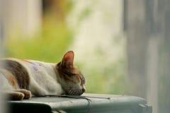 Κοιμάται στοκ εικόνες με δικαίωμα ελεύθερης χρήσης