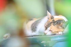 Κοιμάται 3 στοκ εικόνες