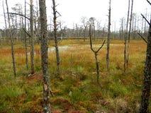 Κοιμισμένα δέντρα Στοκ Φωτογραφία
