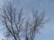 Κοιμισμένα δέντρα Στοκ φωτογραφία με δικαίωμα ελεύθερης χρήσης