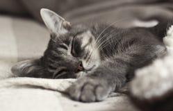 κοιμισμένες Στοκ φωτογραφία με δικαίωμα ελεύθερης χρήσης