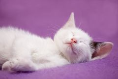 κοιμισμένο λευκό γατακιών Στοκ φωτογραφία με δικαίωμα ελεύθερης χρήσης