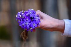 Κοινά λουλούδια hepatica ή kidneywort hepatica Anemone Στοκ Φωτογραφίες