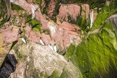 Κοινά πουλιά Murre που κάθονται στους απρόσιτους βράχους, Καναδάς Στοκ Φωτογραφίες